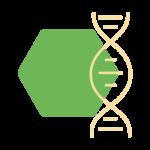 Das Bild zeigt einen Icon als Metapher für die Innere Medizin. Endokrinologie Düsseldorf Essen Mönchengladbach Bonn